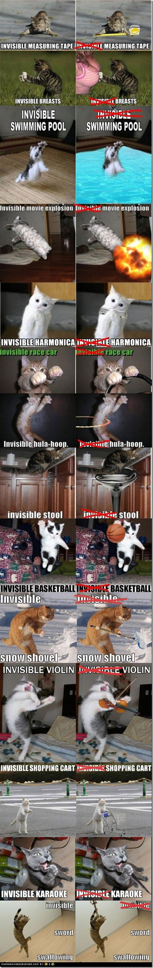 invisible-cats-visible