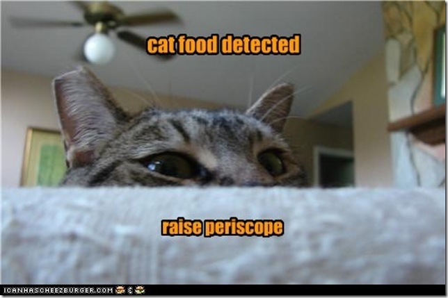 funny-pictures-cat-food-detected[1]